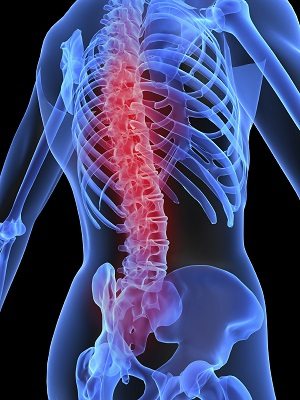 spinal cord research