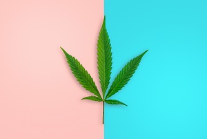 single-cannabis-leaf-on-pink-and-blue-background-male-and-female-strain-concept-hemp-growing-narcotic_t20_gR8Vjbadevwefwef