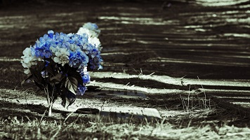 a-row-of-graves-with-blue-and-white-flowers_t20_zny8OPDGHDH